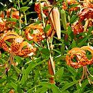 Glorious Wildflowers by MotherNature
