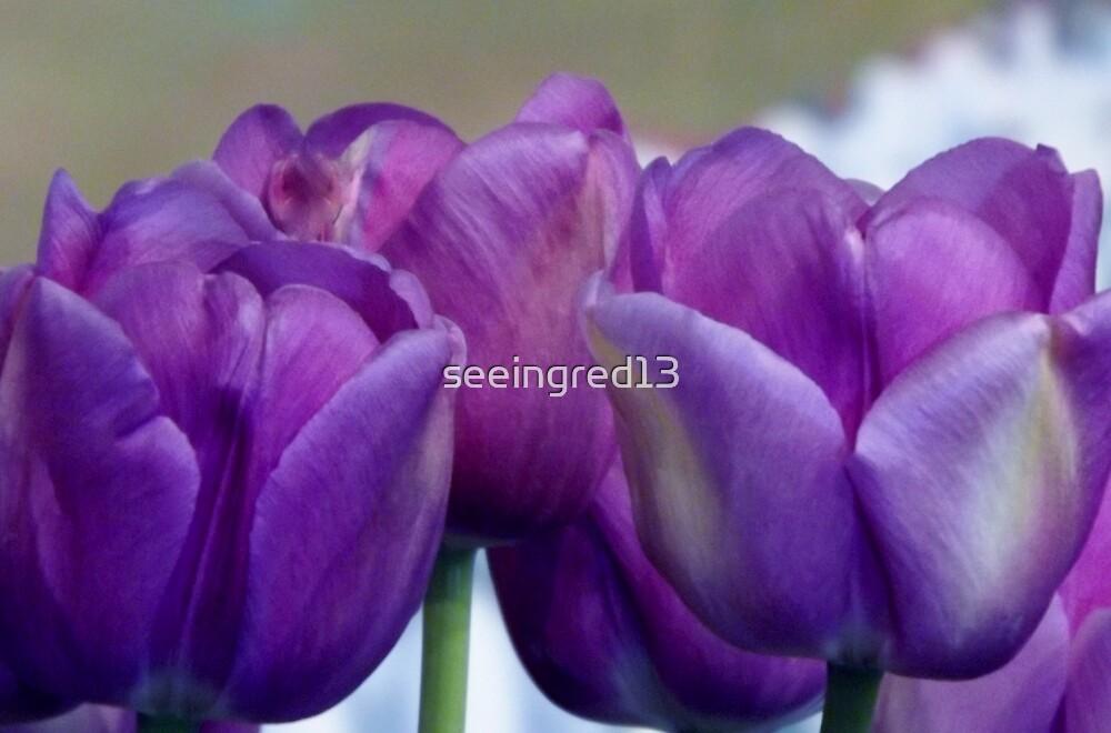 """""""Lavender Jewel"""" by seeingred13"""