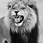 Lion by Alexandria  Rodriguez