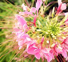 Zoomed In Pink Flower Photo by pandamanda827