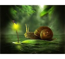 A Snail's Pace Photographic Print