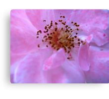 Governor Generals Roses #23 Canvas Print