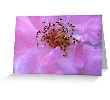 Governor Generals Roses #23 Greeting Card