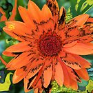 Orange Dream by Robin D. Overacre