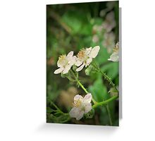 Pacific Northwest Blackberry Blooms Greeting Card