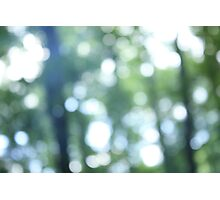 Calm Forest Light Photographic Print
