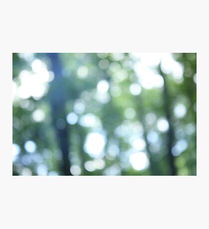 Calm Forest Light Photographic Print