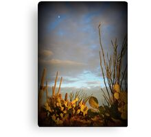 Cacti at Sunset Canvas Print