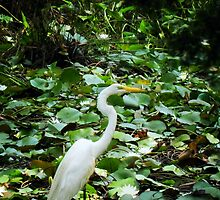 Crane In The Lilies by Sharon Woerner