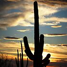 Saguaro Silhouette at Sunset  by Kimberly Chadwick