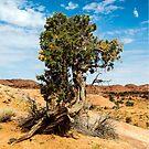 Lone Pine in Monument Valley, Utah by philw