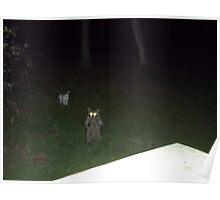 Raccoon standing outside my door Poster
