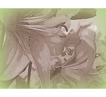 Pencil sketch lily Photographic Print