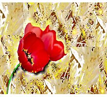 Floral - Tulips  Photographic Print