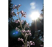 Sunlight Feeds the Flower Photographic Print