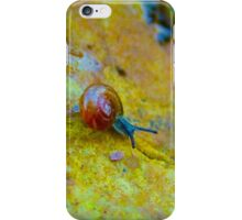 Snail on stone iPhone Case/Skin