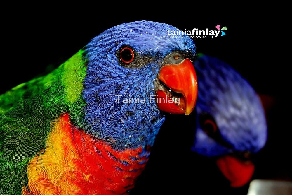 Rainbow by Tainia Finlay