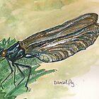 damsel fly by Sam Burchell