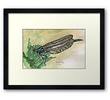 damsel fly Framed Print