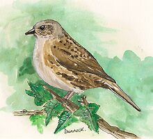 dunnock by Sam Burchell