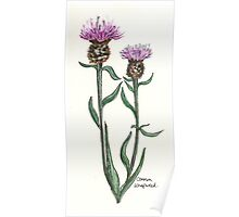 Common knapweed Poster