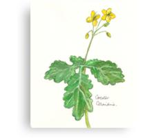 Greater celandine Canvas Print