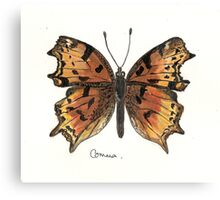 Comma butterfly Canvas Print