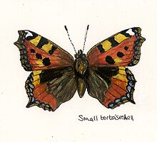 Small tortoiseshell by Sam Burchell