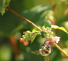 Bee at Work by Tracy Friesen