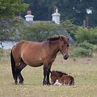 Dartmoor Pony and Foal by Gill Langridge