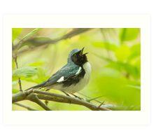 Singing Warbler Art Print