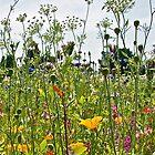 Wild Flowers II by John Thurgood