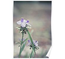 *Lavender Sway Poster