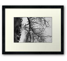Tree moss Framed Print