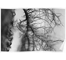 Tree moss Poster
