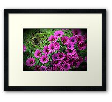 Vignetted Purple Daisies Framed Print