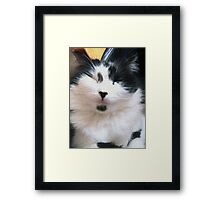 Kato, the Cat that Got the Cream Framed Print
