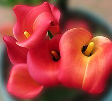 Calla Lilies Dreaming by BlueMoonRose