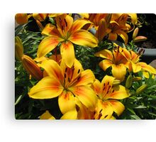 March of the Lilies Canvas Print
