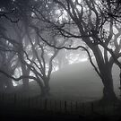 Monday Morning Mist by Ian Rushton