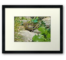 Ready for the World Framed Print