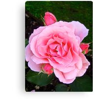 Governor Generals Roses 30 Canvas Print