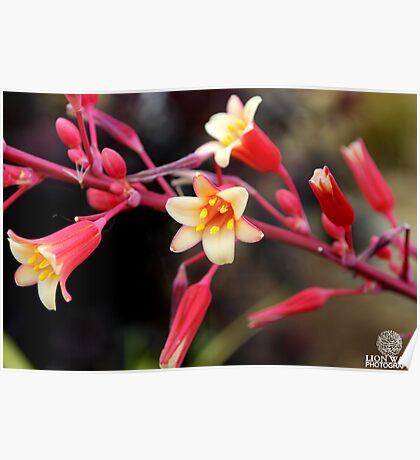 Precious Flowers Poster