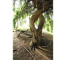 Willowy Tree Photographic Print