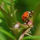Lady Bug by William Brennan