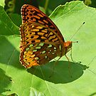 Spangled Fritillary Butterfly (Cover) by William Brennan