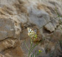 Moth and Sandstone #2 by Paul Danger Kile