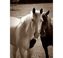 Two Horses in Sepia  Photographic Print