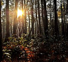The Dark and Mysterious Forest by jbarnesphotos