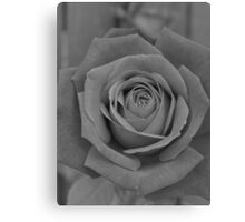 Restful Rose Canvas Print